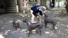Xoloitzcuintle — pronounced SHOW-low-ITS-quintley    Aleph Henestrosa, 44, with his Xoloitzcuintle — pronounced SHOW-low-ITS-quintleythree dogs in Mexico City. Henestrosa acquired his first Xoloitzcuint
