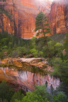 ~ Zion National Park ~ Utah....Designated by President Taft on July 31, 1909....