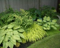 """""""The plants in this border are: front row - a collection of hostas (the larger leaved plants) the grass is Hakonechloa macra 'All Gold', the mass of""""  """"The grass is Hakonechloa macra 'All Gold'. It's an excellent grass for part shade/shade area. (Common name is Japanese Forest Grass)"""