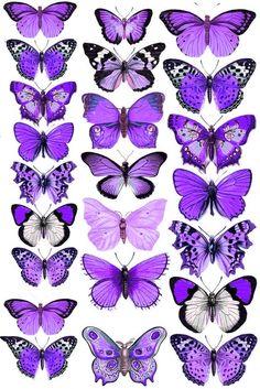 Purple Butterfly Cake, Purple Butterfly Wallpaper, Butterfly Cakes, Butterfly Frame, Flower Backgrounds, Wallpaper Backgrounds, Lol Doll Cake, Hand Doodles, Purple Aesthetic