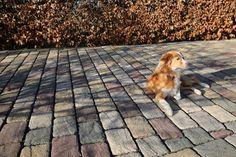 Gardenplaza: Außengestaltung - Betonsteinpflaster macht eine gute Figur (Foto: epr/BetonBild)