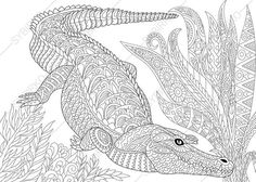 Crocodile Alligator Coloring Page. Adult by ColoringPageExpress