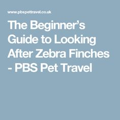 The Beginner's Guide to Looking After Zebra Finches - PBS Pet Travel