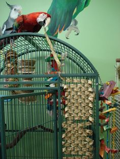 Tips For Birds With Feather Destructive Behaviors