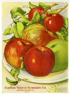 The Wholesome Apple in Cookery ... Scandinavian legends affirm that the apple was the favorite food of the gods. It was one of the first fruits grown by the Romans; it was early introduced into England, and brought from there to America. It is easily cultivated, bears fruit farther north than almost any other, and by means of grafting, almost two thousand varieties have been produced. These facts show in part why the apple stands at the head of all fruits.