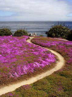 walking the iceplant~Spring in Carmel, CA~ #california #carmel #spring