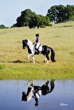 1/2 Friesian out of a mare by Art Deco (DWB)