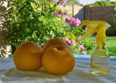 DIY Natural Household Cleaner From Citrus Peels - Ramblings from a Desert Garden Household Cleaners, Diy Cleaners, Household Tips, Diy House Projects, Backyard Projects, Cleaning Recipes, Cleaning Hacks, Citrus Water, Citrus Trees