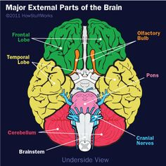 Parts of the brain. I just had an MRI and my brain wasn't that colorful.. lol