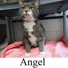 Angel ADOPTED Today!  11/13/14