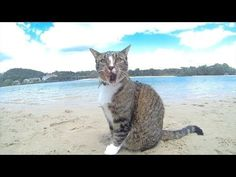 """HAPPY DOGS and one cat in Australia - having fun to the Pharrell Williams """"Happy"""" song. Funny Dogs, Cute Dogs, Funny Animals, Cute Animals, Pharrell Williams Happy, Happy Pharrell, Love My Dog, Excited Dog, Dancing Cat"""