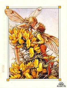 """Vintage print 'Gorse' by Cicely Mary Barker from """"A Flower Fairy Alphabet""""; Poems and Pictures by Cicely Mary Barker, Published by Blackie & Son Limited, London Cicely Mary Barker, Flower Fairies, Flower Art, Fairies Garden, Flower Girls, Fairy Land, Fairy Tales, Kobold, Fairy Pictures"""
