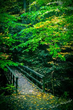 ThroughTheForest   Flickr - Photo Sharing! ©ThompCyn Photography - Cynthia Harris http://www.thompcynphotography.com