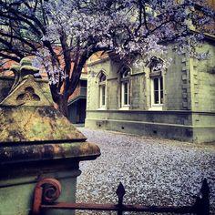 Jacarandas in Grote Street Adelaide South Australia, Beautiful Homes, Places, Jacaranda Trees, Australia, House Of Beauty, Lugares
