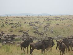 19 July, 2012: This photo was taken by Sanctuary Olonana guide Nelson on a full day game drive into the Mara.