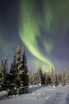 Northern Lights Over Boreal Forest, North America by Breiter, Matthias - Wall Art Giclee Print or Canvas