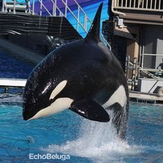 Orcas Seaworld, Seaworld Orlando, Wale, Killer Whales, Sea World, Family Life, Dolphins, Men's, Animals