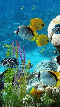#dailydoseofcolor  Tropical Fish