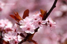 Ode alla Primavera