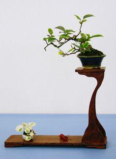 苔猿の壺 盆栽