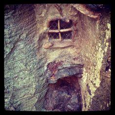 Fairy tree door