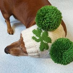 Hat with clover for dog with two pompons, hat clover for dachshund, St. Patrick's Day hat with clover for dog Dachshund Clothes, Mini Dachshund, Winter Knit Hats, Warm Winter Hats, St Patricks Day Hat, Head And Neck, Small Dogs, Your Pet, Knitted Hats