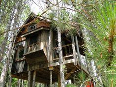 eco-tree-fort-lynne-knowlton-enpundit-12