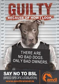 BSL: I hate that when I went to adopt my Border Collie they took one look at my other dog which is an American Bulldog and told me to make sure he always has his collar on because if he get out we would kill him. I asked why because he looked too much like a Pitbull.