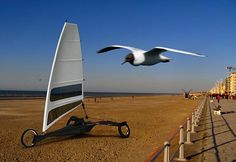 Albatros 1. A sand vehicle that lets you control wind using a sail on the sand.  The wind-powered ride takes inspiration from the natural aerodynamics of birds and their wings.