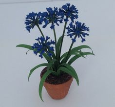 Lucille Locket African Lily