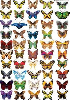 social+icons+butterflies | ... butterflies, exquisite and vivid, colored butterfly, Papilio, vector