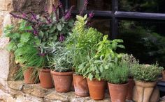 Grow herbs planning a herb garden how to in the can you mason jars planting pots . grow herbs in pots indoors