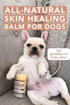 Itchy Dog, Hot Spots, Healing Herbs, Dog Care, Dry Skin, Puppy Love, Dog Training, Dogs And Puppies, Doggies
