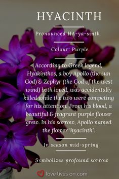 Purple hyacinth meaning. Purple hyacinth symbolizes deep sorrow making it a very appropriate funeral flower. Click to learn 10+ more different types of funeral flowers, funeral flower colour meanings & how to choose flowers to create a meaningful bouquet. Funeral Flower Meanings | Funeral Flower Arrangements | Types of Hyacinth Meaning | Flowers that Represent Death | Mourning Flowers
