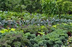 Learn to How to Create a Potager: A French Kitchen Garden