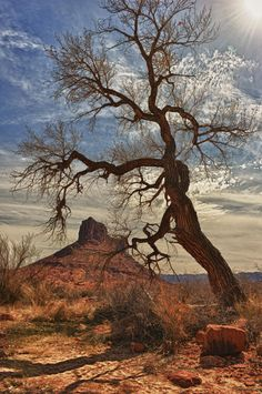 The Gnarly One - © Jeff R. Clow   A land that takes one on a journey to the past....