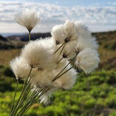 Nature Grass, Nature, Flowers, Plants, Photography, Naturaleza, Photograph, Grasses, Fotografie