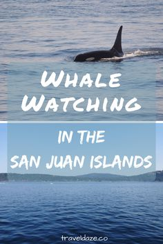 Spot orcas (killer whales) in the waters of Washington near the San Juan Islands