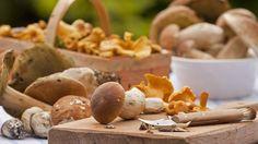 Schadhafte Stellen müssen vor dem Trocknen entfernt werden. (Quelle: imago/blickwinkel) Mushroom Fungi, Wine Recipes, Potato Salad, Stuffed Mushrooms, Potatoes, Cheese, Canning, Vegetables, Ethnic Recipes