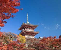 Japan Tours, Best places in Japan, What things to do in Japan? Stuff To Do, Things To Do, Asia, Tours, Japan, Places, Things To Make, Japanese Dishes, Japanese
