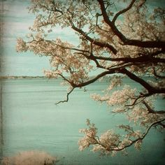 tree branches water sea ocean serene calm teal by SherriConley