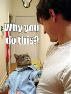 Amazing Creatures: 30 Funny animal captions - part 10 (30 pics)