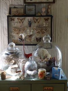 Vignette with bell jars and insect collection.