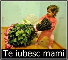 Te Iubesc Mult De Tot Mamico - Te iubesc mult de tot mamico si pentru asta, ti-am adus niste flori Cute, Beautiful, Kawaii