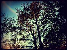 #rainbow #trees