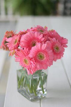 Perfectly pink gerbera daisies