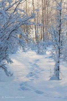 Snowy Pictures, Nature Pictures, Winter Photography, Landscape Photography, Winter Christmas Scenes, Snow Forest, Winter Images, Winter Scenery, Snowy Day