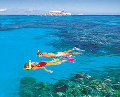 They make this snorkeling in the Great Barrier Reef look so easy. Ok...maybe I am not that big a chicken.