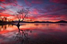 Lake Wanaka, New Zealand tree sunset