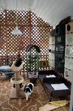 18 Amazing Cat Room Designs For Your Inspiration Informations About 18 Amazing . - How to make a dog toilet in the Garden